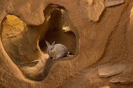 Burrower: Rabbit Image - Science for Kids All About the Burrowers