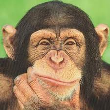 Chimpanzees Posing for the Camera Image - Science for Kids All About Chimpanzees