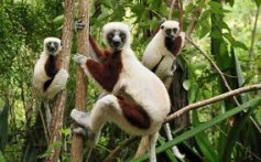All About Lemurs and Monkeys