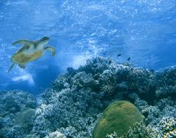 Oceans and Sea Life - Science for Kids Image