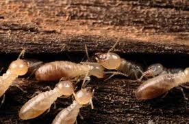 Fun Termites Quiz – FREE Interactive General Quiz Questions for Kids