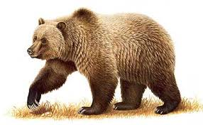 Creamy Brown Bear Image