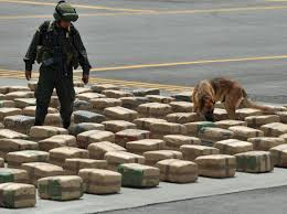 Sniffer Police Dog Training Image
