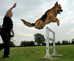 Police Dog Training Image