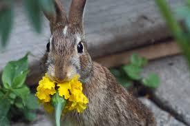 Rabbit Eating a Flower Image
