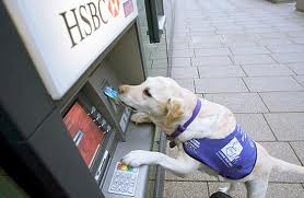 service-dog-working-an-ATM image