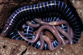Caecilian Mother with Her babies Image - Science for Kids All About Caecilians
