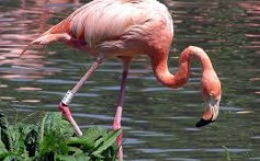 All About Flamingos – Showstoppers of the Bird World