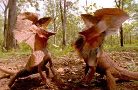 Two Frilled Lizards Fighting Image - Science for Kids All About Frilled Lizards