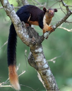 Fun Squirrel Facts for Kids