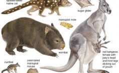 All About Marsupials and Their Family Members