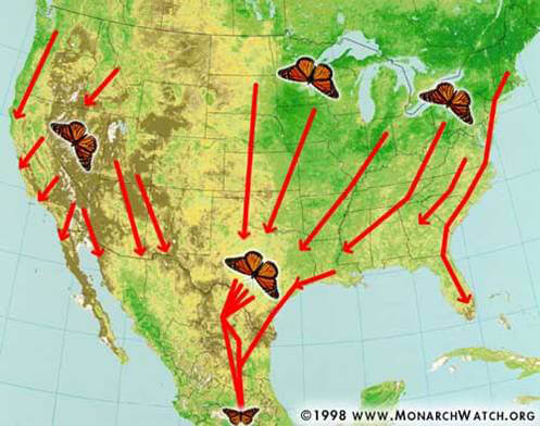 Monarch Butterfly Migration Image