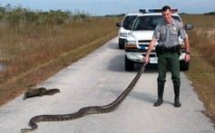 All About Pythons – Snakes That Swallow Whole Animals