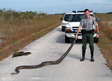 A Python Being Held by a Police Officer Image - Science for Kids All about Pythons