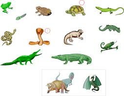 Samples of the Kinds of Reptiles and Amphibians Image - Science for Kids All about Reptiles and Amphibians