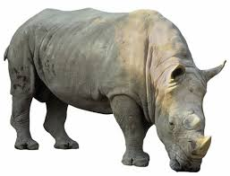 A Rhino Image - Science for Kids All About Rhinos