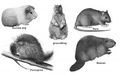 All About Rodents and Their Types