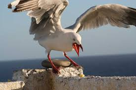 Sea Birds and Their Classifications