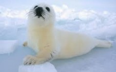 All About Seals – The Perfect Swimmer Animals