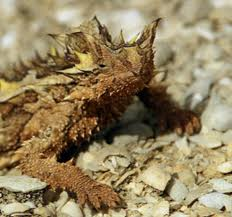 Thorny Devil Lizard – Download Free Printable Science Worksheets for Third Grade Kids