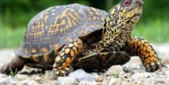 All About Turtles – How They Differ From Tortoises?