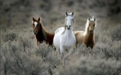 All About Wild Horses and How They Evolved From Early Horses