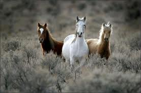 Wild Horses in Grasslands Image - Science for Kids All About Wild Horses