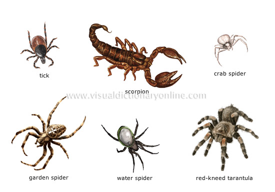 Arachnids Family Members – Free Printable Hidden Words Puzzle