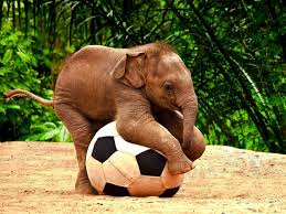Baby Elephant Playing with a Ball Image