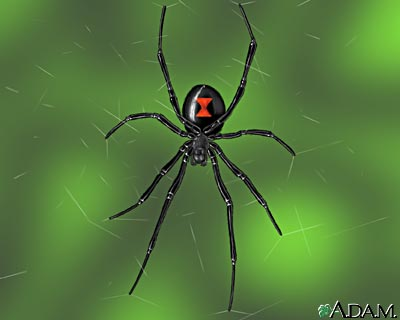 Black Widow Spider Image - Science for Kids All About Spiders