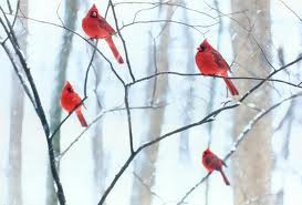 Flock of Red Cardinals on Tree Branches Image