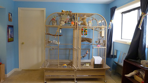 A Cockatoo Cage in a Room Image