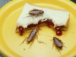 Cockroaches Eating Bread Image