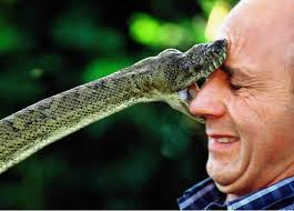 Fierce Snake Biting a Man's Face Image