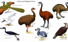 All About Flightless Birds and Their Types