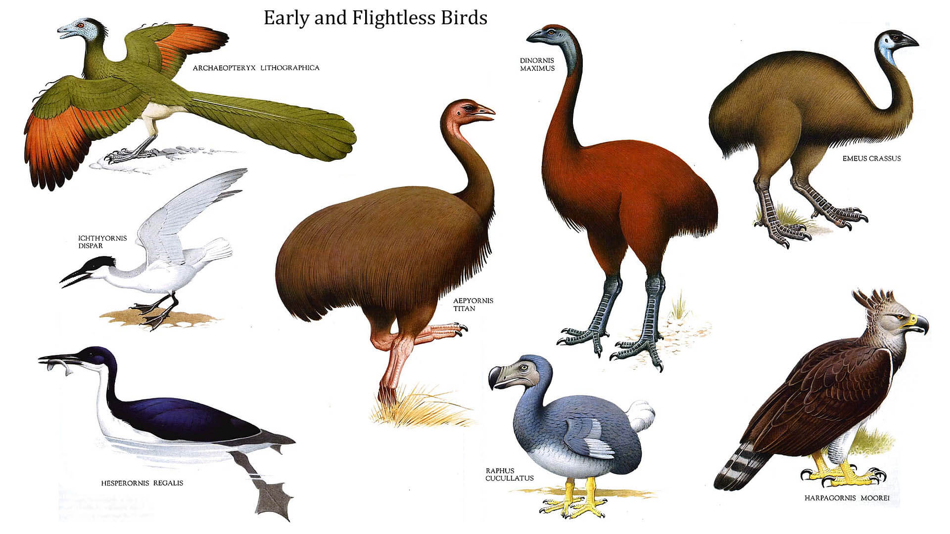 Flightless Birds Fun Kids Facts