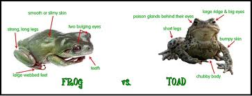 Difference Between Frogs and Toads Image - Science for Kids All About Frogs and Toads