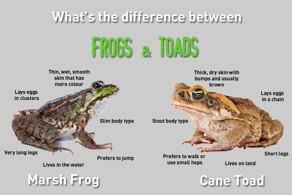 Frogs and Toads - Easy Science Kids Hidden Words Game Free to Print -