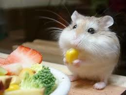 Hamster Eating and Stuffing its Cheeks Image