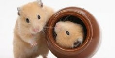 All About Hamsters – Cute Little Animals