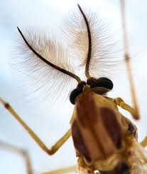 Insect Antennae Image