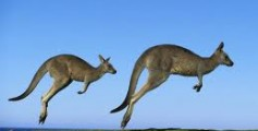 All About Kangaroos – The World's Best Jumpers