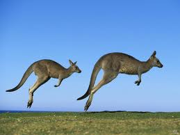 Kangaroos – The World's Best Jumpers
