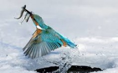 All About Kingfishers – The Expert Fishermen Birds