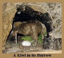 Kiwi in the Burrow with an Egg Image