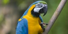 All About Tropical and Exotic Birds