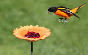 Orioles Flying to a Flower Image