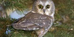 All About Owls – The Symbol of Learning