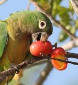 Parrot Eating Fruits Image