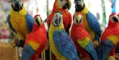 All About Parrots and Their 350 Types